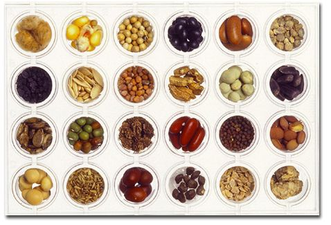 plb108-course-develop-seeds-media-seeds.jpg